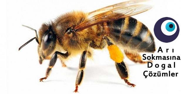 Arı Sokmasına Doğal Çözümler