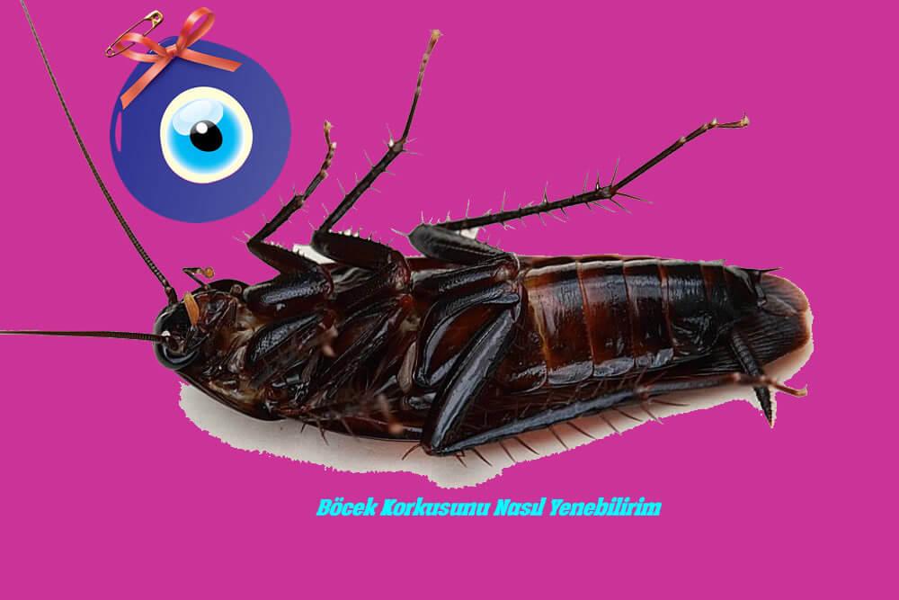 Böcek Korkusunu Nasıl Yenebilirim?