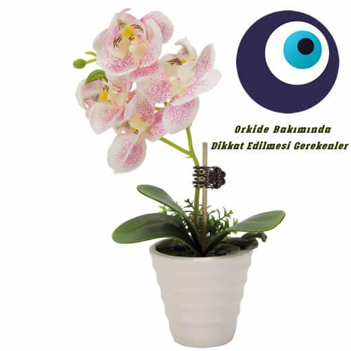 Evde Orkide Bakımı Nasıl Olmalı?